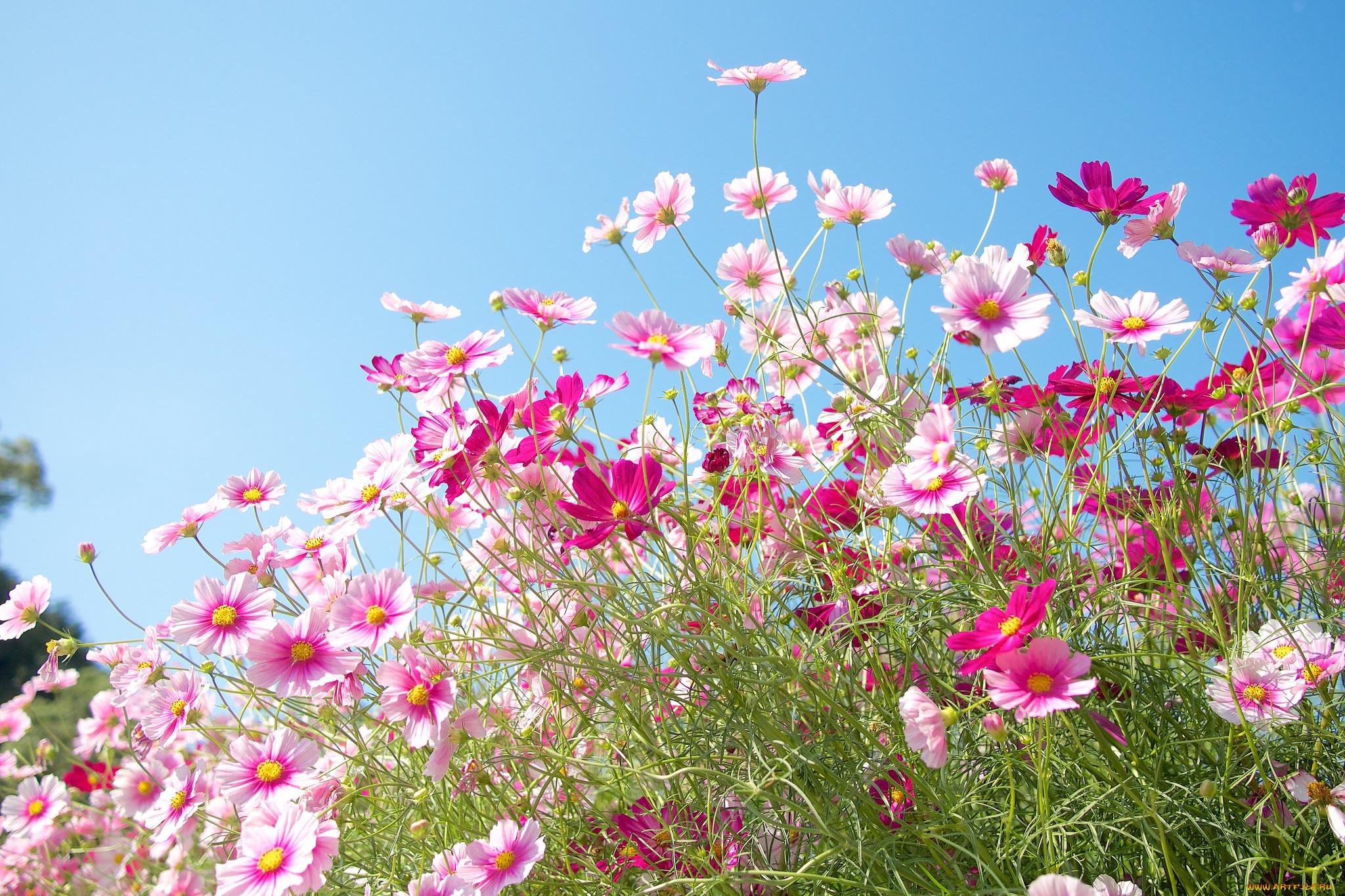 Полевые цветы фото в хорошем качестве